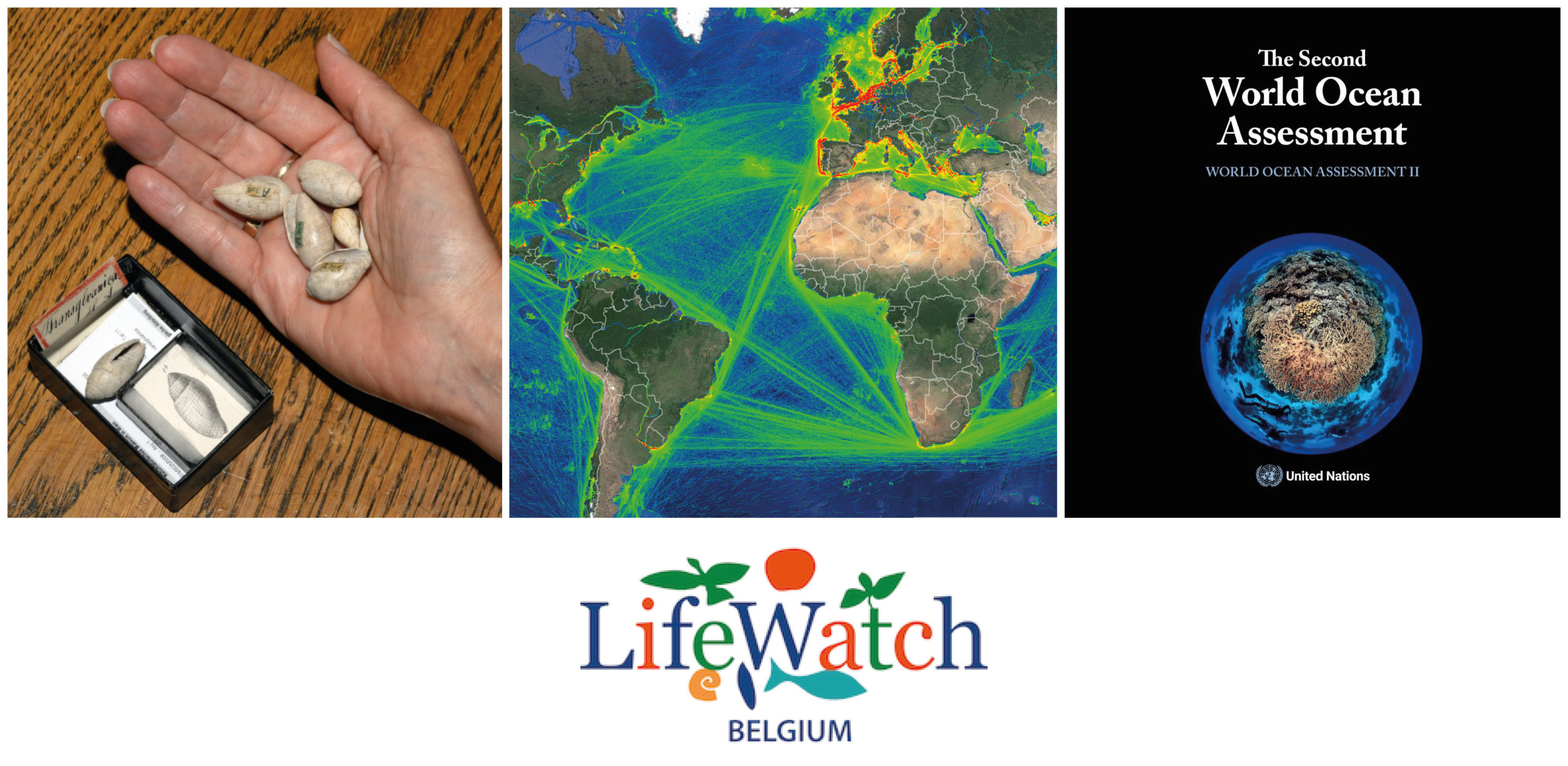 Keeping up with LifeWatch Belgium